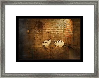 Spotlight Framed Print by Inesa Kayuta