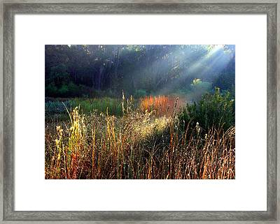 Spotlight On Red Reeds Framed Print