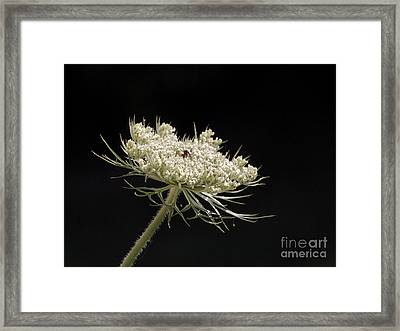 Spotlight On The Queen Framed Print