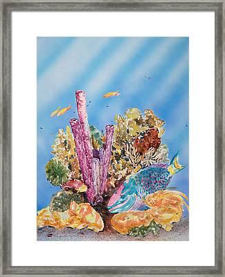 Spotlight Parrotfish Framed Print