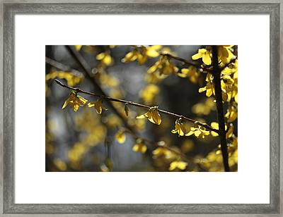 Framed Print featuring the photograph Spotlights  by Connie Handscomb