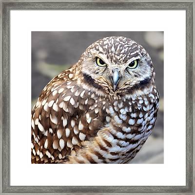 Spots - Burrowing Owl Framed Print