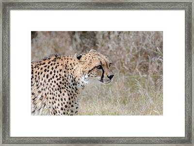 Framed Print featuring the photograph Spotted Beauty 2 by Fraida Gutovich