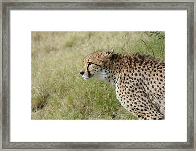 Framed Print featuring the photograph Spotted Beauty 3 by Fraida Gutovich