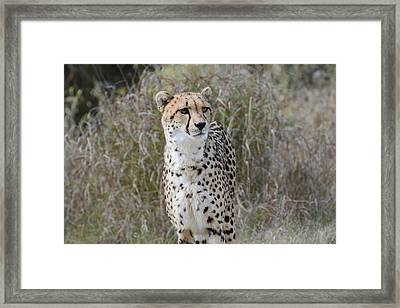 Framed Print featuring the photograph Spotted Beauty by Fraida Gutovich