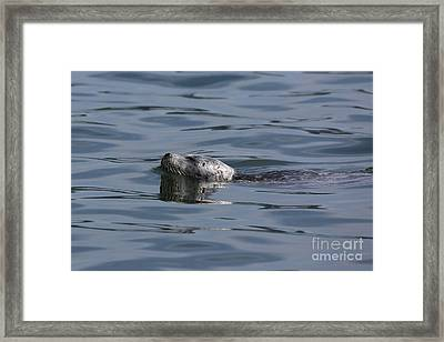 Spotted Beauty Framed Print by Sheila Ping