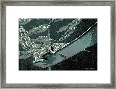 Spotted Eagle Ray Framed Print by DigiArt Diaries by Vicky B Fuller