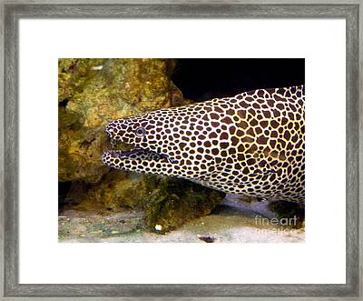 Framed Print featuring the photograph Spotted Eel by Terri Mills