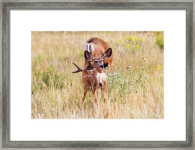 Spotted   Framed Print by James Marvin Phelps