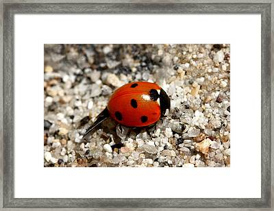 Spotted Ladybug Wings Dragging In Sand Framed Print by Tracie Kaska