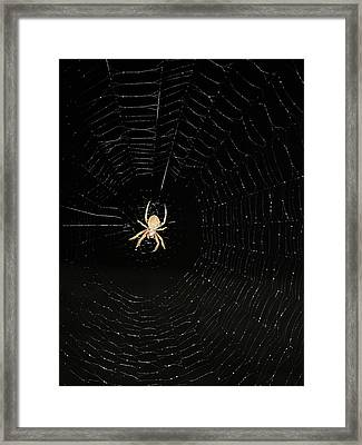 Spotted Orbweaver Framed Print