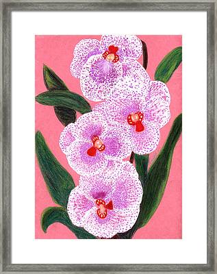 Spotted Orchid Against A Pink Wall Framed Print by Carliss Mora