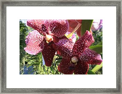 Spotted Orchid Framed Print by Tara Moorman Photography