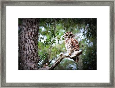 Spotted Owl II Framed Print