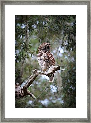 Spotted Owl Framed Print