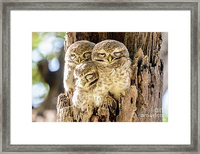 Spotted Owlets Framed Print