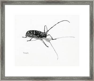 Spotted Pine Sawyer Framed Print