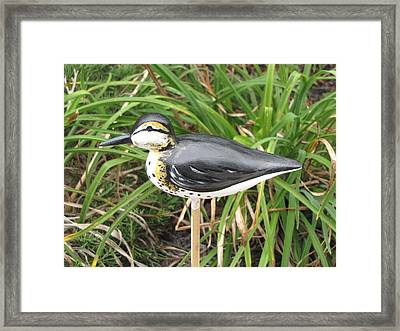 Spotted Sandpiper  Framed Print by Kevin F Heuman
