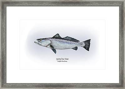 Spotted Sea Trout Framed Print by Ralph Martens
