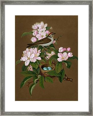 Sprague's Natural History Chipping Sparrow Framed Print