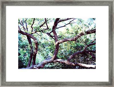 Sprawling  Framed Print