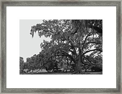 Sprawling Live Oak I I Framed Print by DigiArt Diaries by Vicky B Fuller