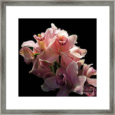 Spray Of Pink Orchids Framed Print