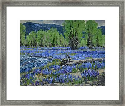 Spread Creek Lupine Framed Print by Lanny Grant