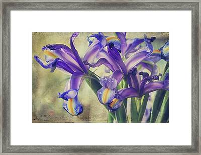 Spread Love Framed Print by Laurie Search