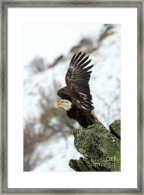 Spread The Wings Framed Print by Mike Dawson