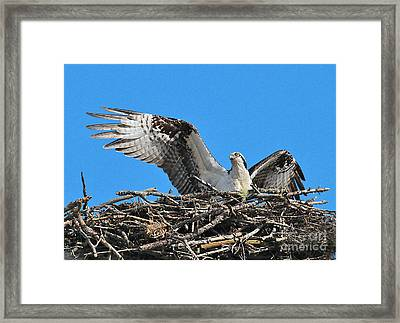 Framed Print featuring the photograph Spread-winged Osprey  by Debbie Stahre