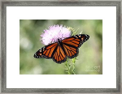 Spread Your Wings Framed Print by Anita Oakley