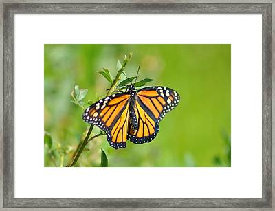 Spread Your Wings Framed Print by Bill Cannon