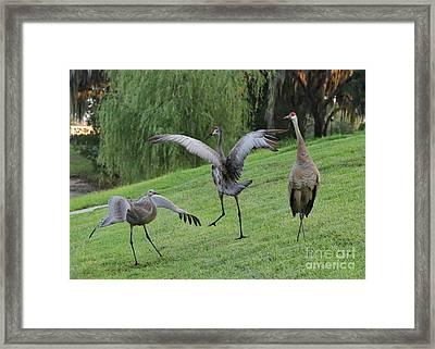 Spread Your Wings Framed Print by Carol Groenen