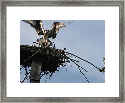 Spread Your Wings Framed Print by Johanne Hammond
