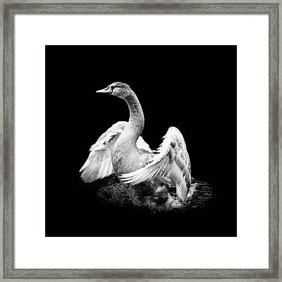 Spreading Framed Print
