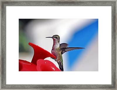 Spreading My Wings  Framed Print