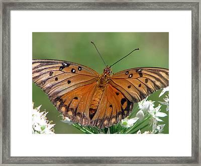 Spreading My Wings Framed Print by Dottie Dees