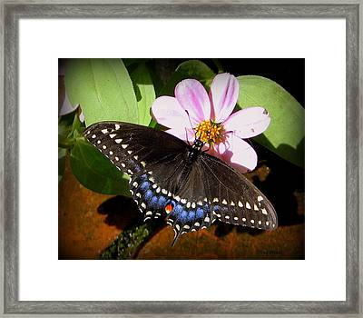 Spreading My Wings Framed Print by Trina Prenzi