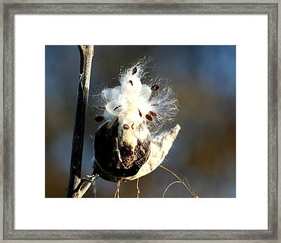 Framed Print featuring the photograph Spreading Seeds by Diane Merkle