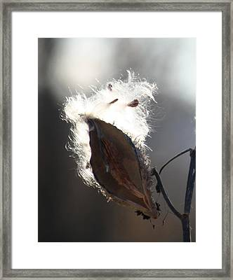 Spreading Seeds IIi Framed Print