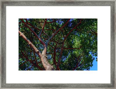 Spreading Trees Provide Shade And Coolness On A Hot Summer Day Framed Print by George Westermak
