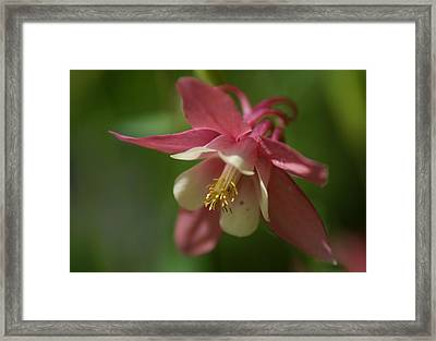 Framed Print featuring the photograph Spring 1 by Alex Grichenko