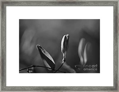 Spring 2016 13 Framed Print