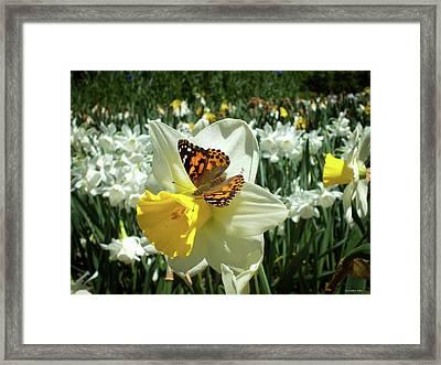 Spring 2016  Framed Print