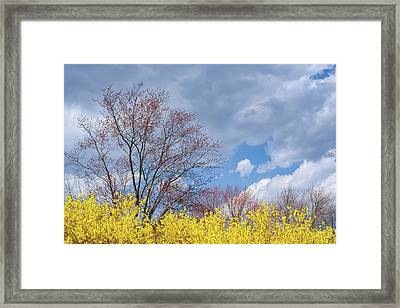 Framed Print featuring the photograph Spring 2017 by Bill Wakeley