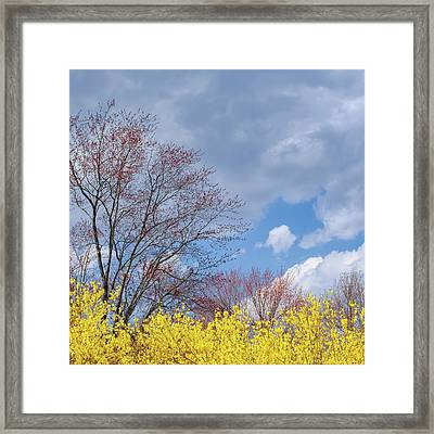 Framed Print featuring the photograph Spring 2017 Square by Bill Wakeley