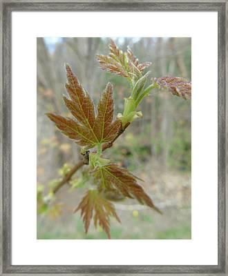 Spring-a New Beginning Framed Print