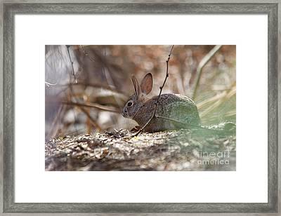 Spring Framed Print by Afrodita Ellerman