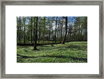 Spring All Over Framed Print by Randi Grace Nilsberg